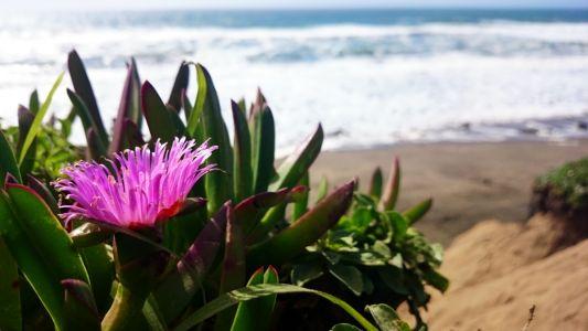 Raj na pobreží Tichého oceánu neďaleko Fort Funston