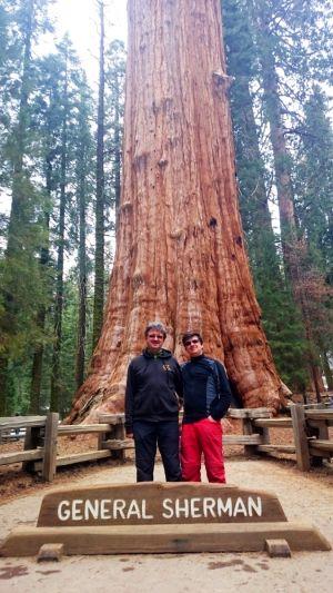 General Sherman, najväčší strom na svete