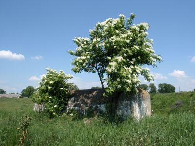 Kešky v okolí Devínskej: Po stopách ľahkého opevnenia | Autor: schevka