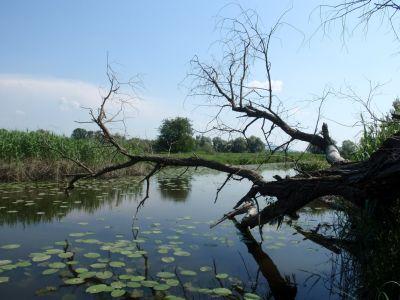 Príroda v okolí Devínskej: Rameno Moravy | Autor: schevka
