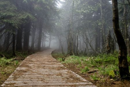 Cesta na Kněhyni | Autor: Lienka86