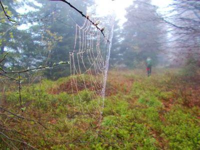 Mlhavým ránem | Autor: TOIPA