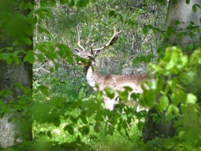 Sezónne uzávery chránia zvieratá