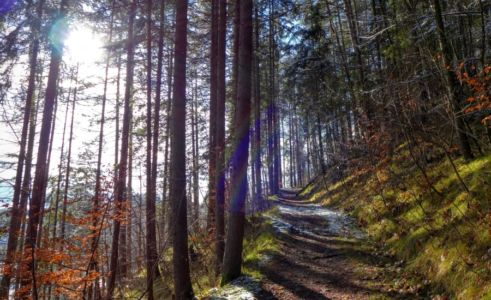 Cesta na Tlstú horu