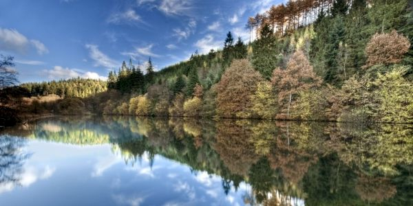 Dalby Forest, Yorkshire