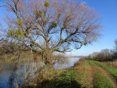 Okolie Malého Dunaja | Autor: schevka