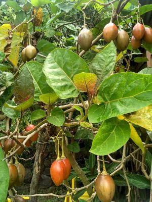 Tropické ovocie chutí výnimočne