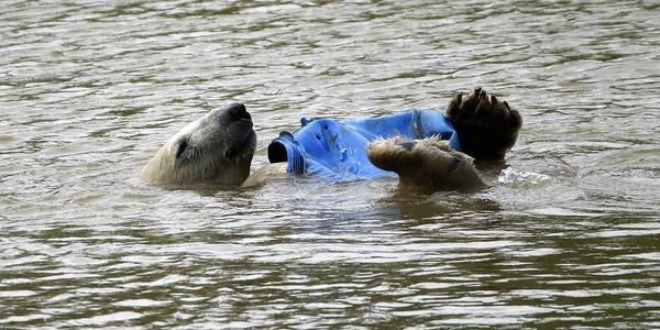 Sezóna ľadových medveďov