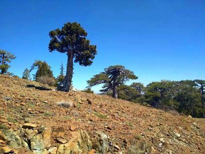 Trail okolo kopca