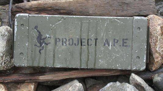 Originálny ammo box kešky Project APE