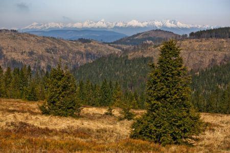 Vysoké Tatry z Hekerovej