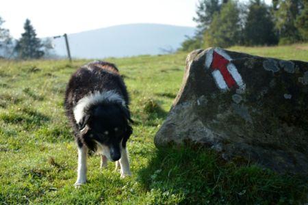 Červena znacka - a pes