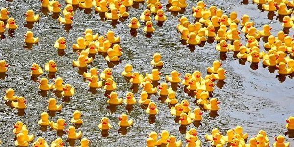 Nábor kačičiek