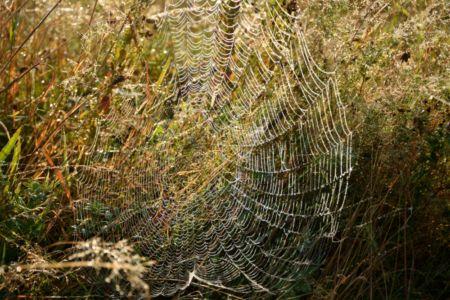 Obrovská orosená pavučina