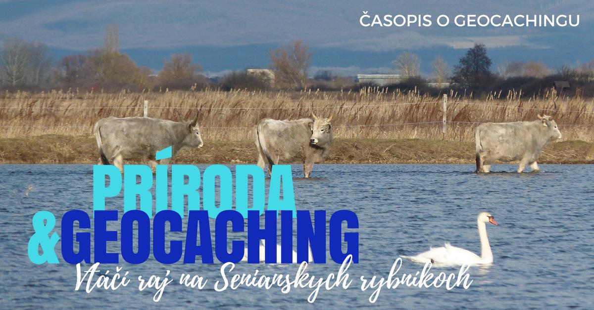 Príroda a geocaching: Vtáčí raj na Senianskych rybníkoch